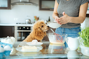 Woman making homemade food for dog