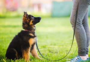 a leash is needed to train your puppy