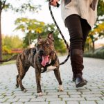 7 Dog Walking Tips Everyone Should Know