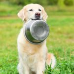 Foods That Are Dangerous for Your Dog