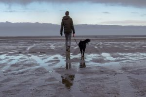 Properly Dry Your Dog after Walking in the Wet Weather