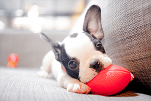 a puppy playing with ball