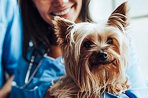 a sick dog receiving care from a vet nurse
