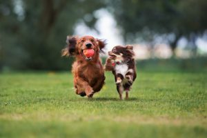 canine flu is very contagious between dogs