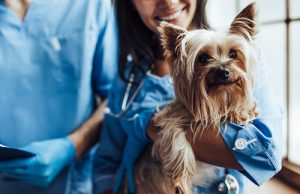 prevent your dog from spreading the flu