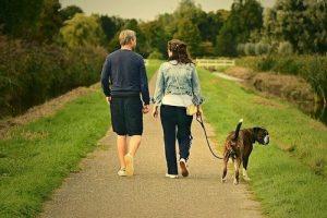dog walking tips during COVID-19