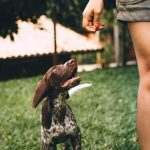 Four Dog Walking Tips During COVID-19