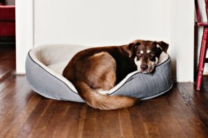 many reasons for a pet's behavior to change