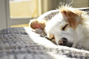 pet's behavior include a time set for sleep