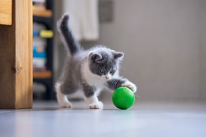 gray and white kitten playing with a green ball