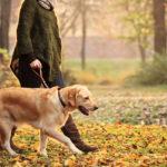 women walking her dog through fall leaves