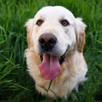 a dog twisting their body might be under duress or pain