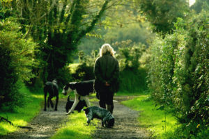 dogs and their parents can go to trails to enjoy the great outdoors