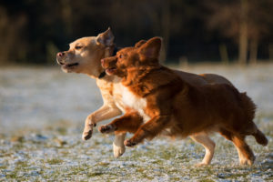 dogs can be more jubilant around trails because they can enjoy a higher degree of autonomy