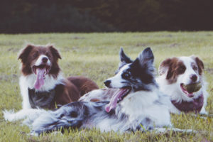 going to trails is a great way for dogs and their owners to relax and unwind