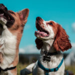 northern virginia has ample trails dogs and their owners can roam and explore