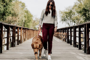 besides burning calories walking a dog is needed for their well-being