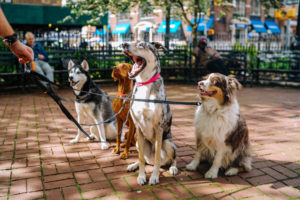 dog walking can be part of the pet sitting service