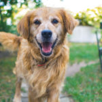pet sitting might be an option for pet owners who will leave their pets unattended for a while