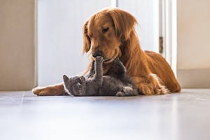 pet sitting services making pets happy