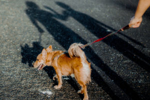 walking a dog can help the dogs health and metal well-being