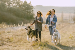walking is beneficial for the dogs and their owners
