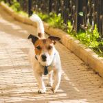 dog off leash walking in park