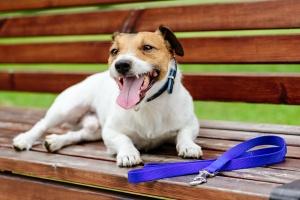 dog off leash sitting on a bench