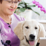 dog owner and her pet look at prospective pet-sitting companies on her ipad