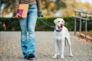 professional pet sitters strolls as she is pet sitting the dog with the leash she is holding