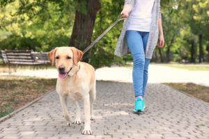 professional pet sitters walks the dog she is pet sitting in the park