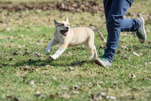 a dog running next to their owner off leash