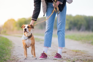 Chantilly VA Dog walking on a  trail