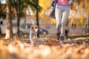 Oakton VA Dog Walking services walking a pup