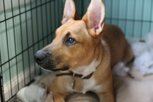 dog whos owner had help For Crate Training A Rescue Dog