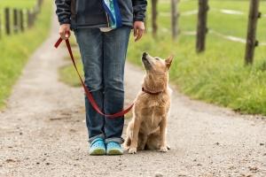 dog looking at his professional dog walker