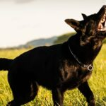 Dogs Bark When Out on a Walk- Dog Barking While Taken Outside
