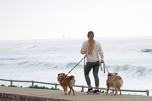 a man walking multiple dogs by the beach on the pathway