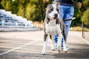 beautiful dog on active dog walks with the owner in the park