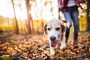 woman with on dog walks in an autumn forest