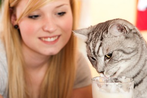 cat is nibbling on a latte macchiato