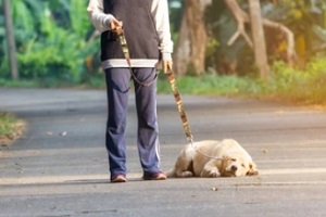 lazy dog tired of walking with owner